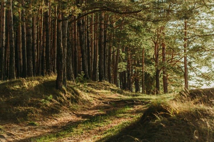 Imagen de un bosque para ilustrar que en las canciones infantiles en francés es habitual encontrar referencias al mundo natural y animal